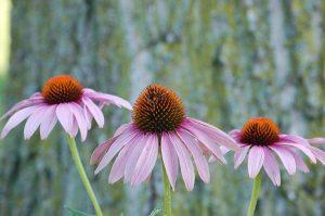 Plantas para curso de fitoterapia