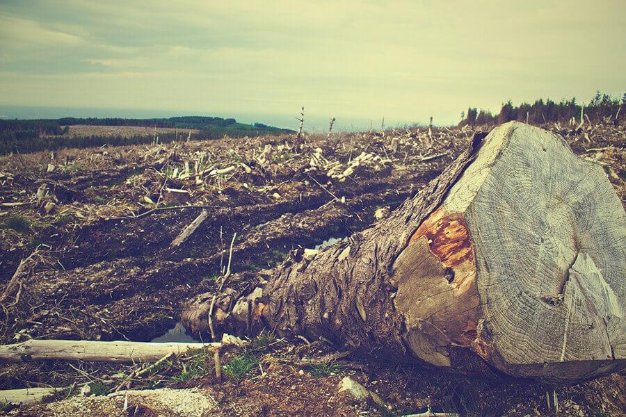 Pandemia por la deforestación